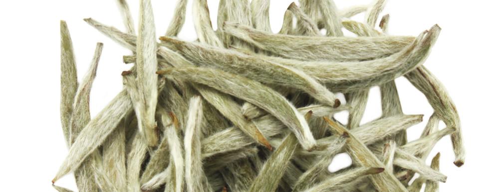 downy white hairs on white tea