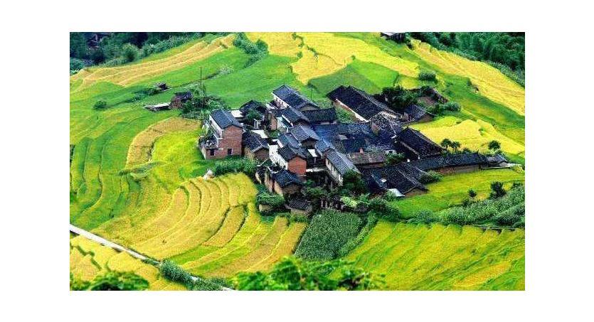 Kinas 4 fantastiska regioner för att odla te